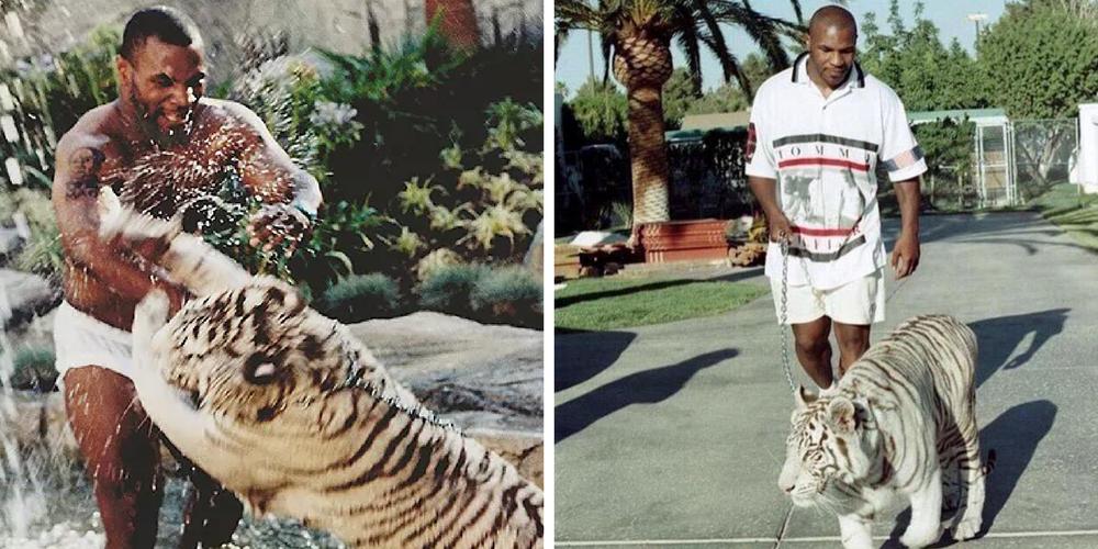 Mike Tyson dan harimaunya